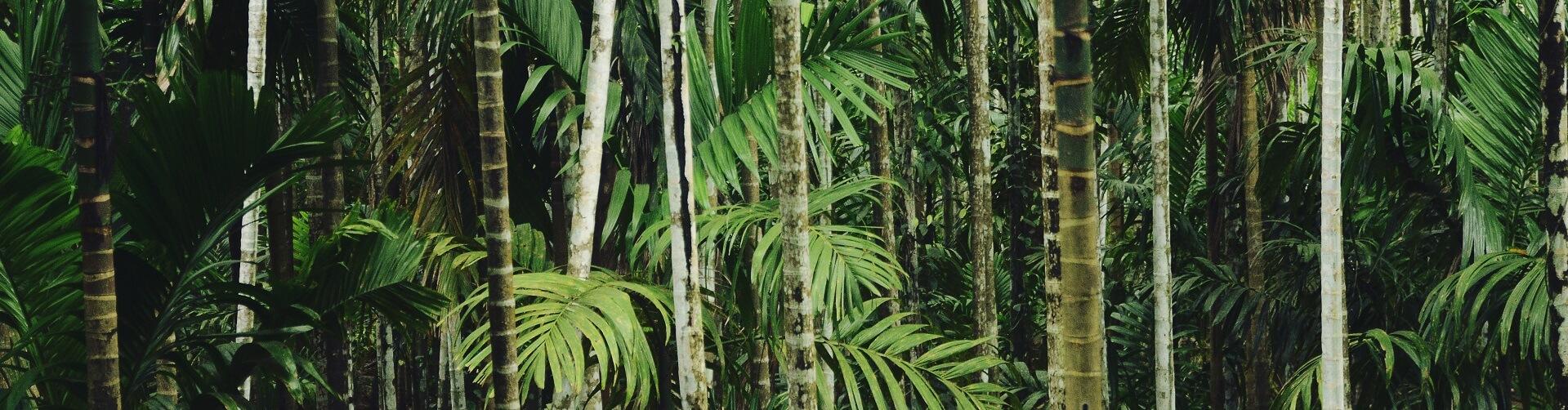 Bambuspflanzen für Balkon, Garten und Terrasse