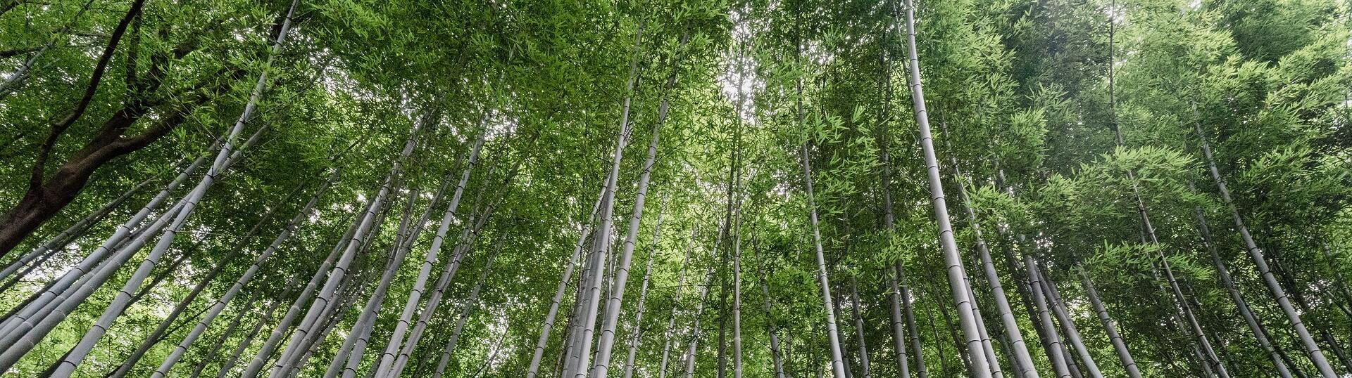 Dünger für schneller wachsenden Bambus
