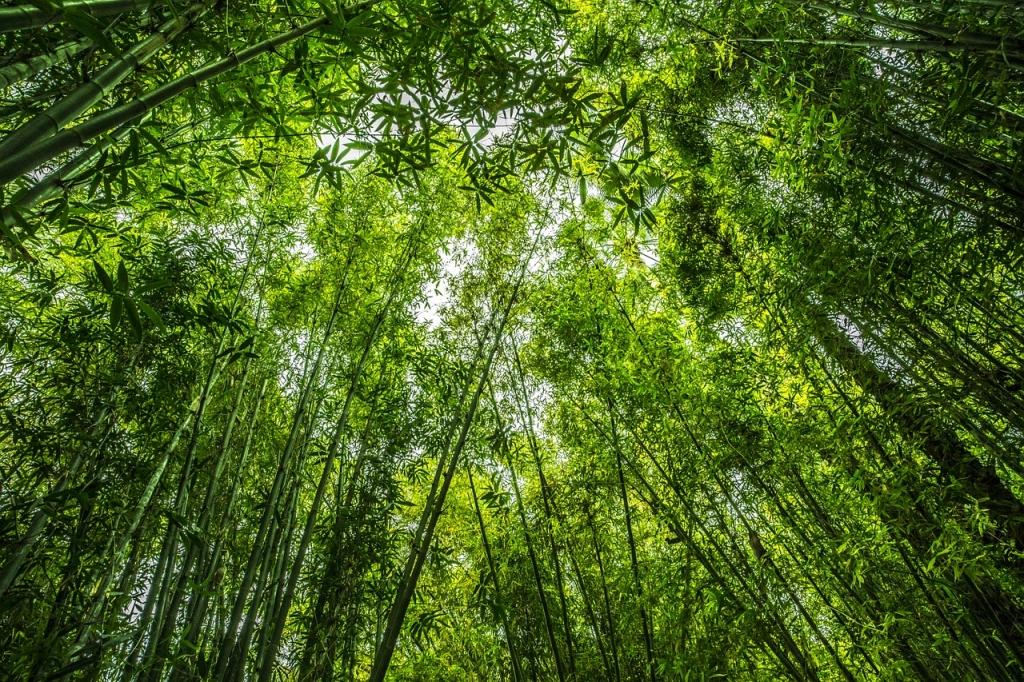 beste-jahreszeit-zum-bambus-anpflanzen