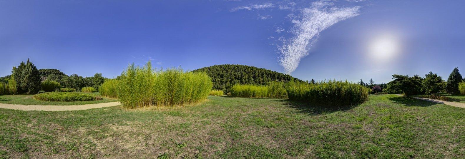 Bambus im Garten