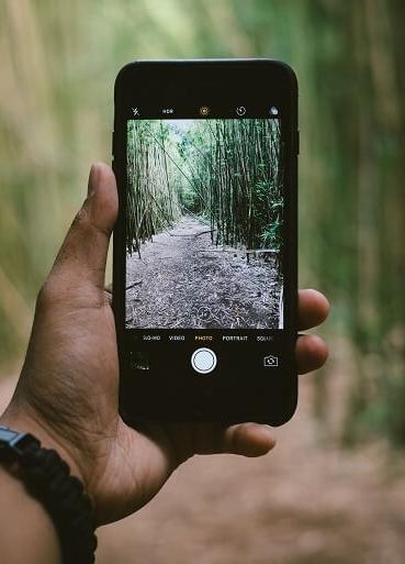 Bambus Themen Und Blog