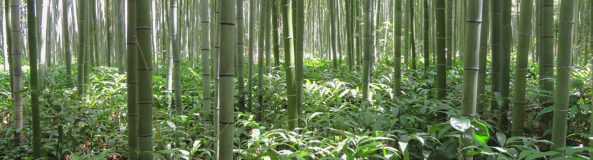 Rhizomsperren für Bambus