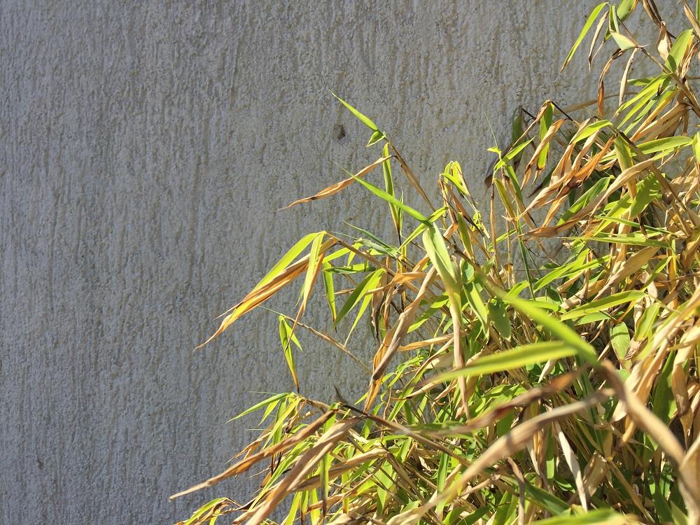 Standort von Bambus