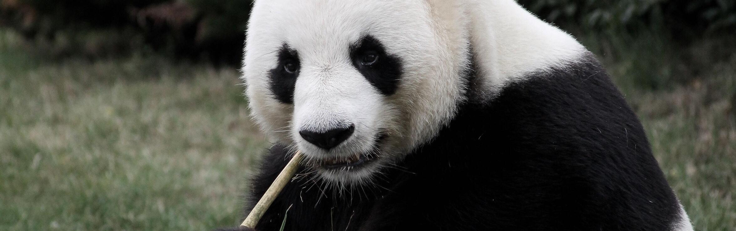 Bambus Strohhalme Bambus Freunde