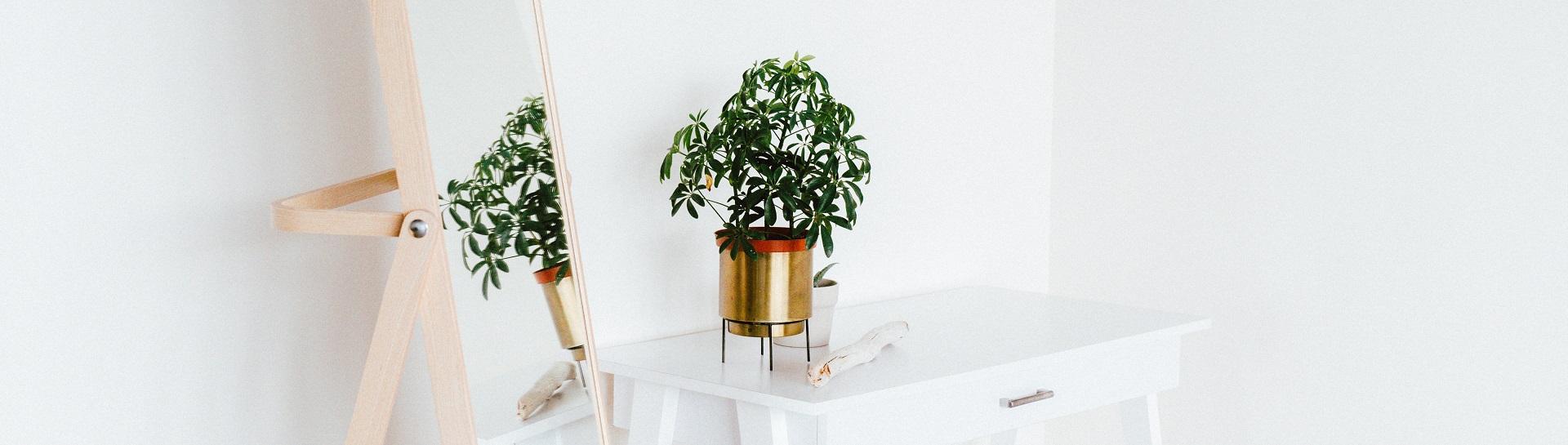 bambus spiegel kaufen bambus freunde. Black Bedroom Furniture Sets. Home Design Ideas