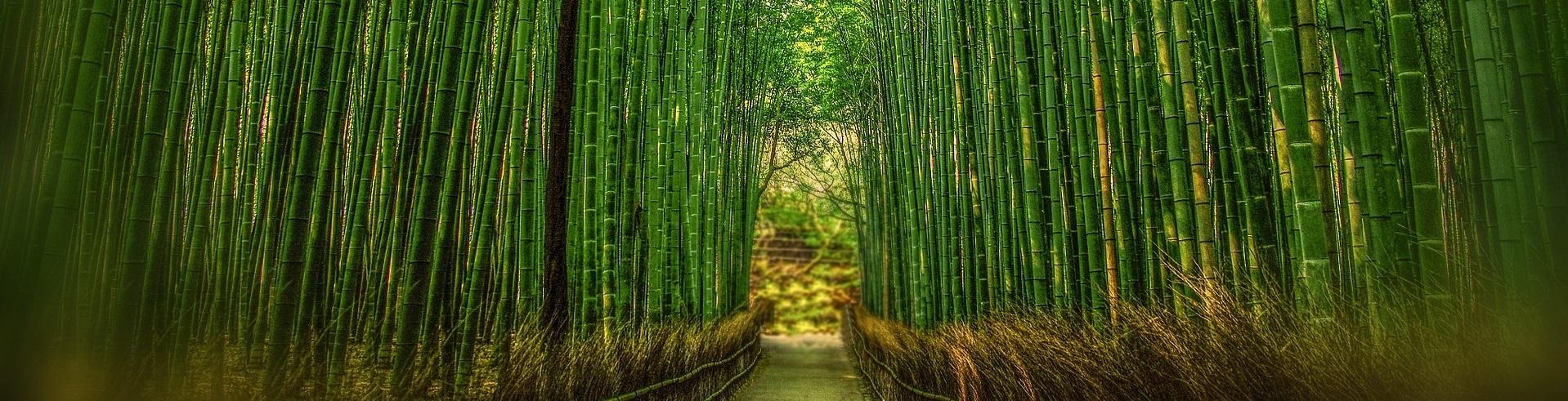 bambus tapete viele motive gr en bambus freunde. Black Bedroom Furniture Sets. Home Design Ideas