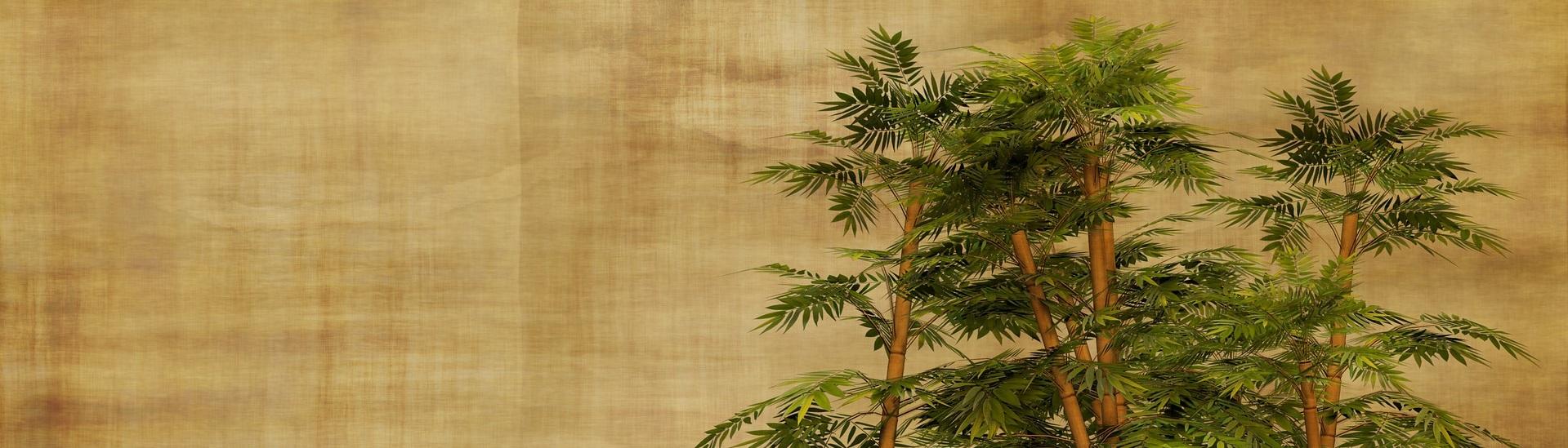 Wandtattoo mit Bambusmotiv