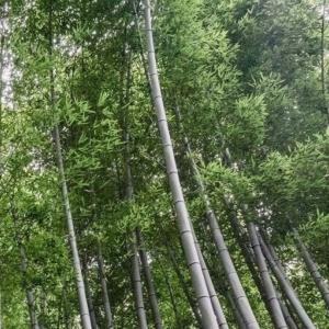 Bambus Dünger