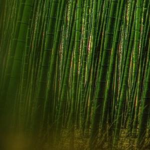 Bambus Tapeten