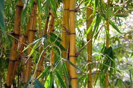 Bambus als Alternative