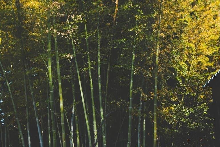 Bambus-Pflanzen-optimiert